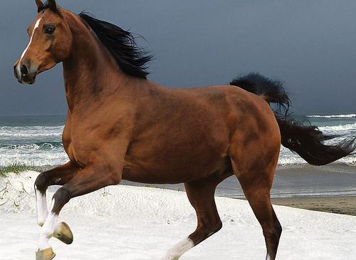 不同时期马匹的饲养管理